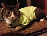 Pet Shirts For Cats