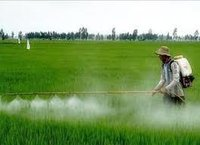 Agricultural Organic Insecticides