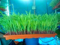 Hydroponic Fodder Machines