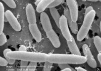 V Pro La Lactobacillus Acidophilus