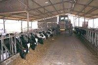 Dairy Farm Sheds