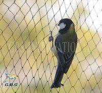 Rigid Anti Bird Nets