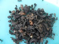 Dry Squid Waste For Animal Feed