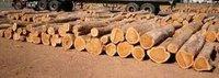 Sudan Teak Woods