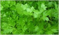 Exotic Parsley Vegetable
