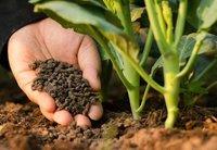 Fertilizers In Raipur Fertilizers Dealers Traders In Raipur