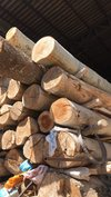 Low Price Russian Poplar Logs