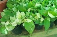 Best Price Indoor Plants
