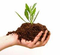 Vermi Compost (Organic Fertilizer)