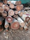 Top Rated Wooden Logs