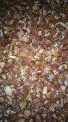 Fresh Broken Betel Nuts