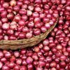 A Grade Fresh Red Onions for Food