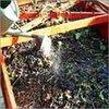Organic Pesticides Powder