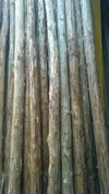 Natural Lyptus Wooden Poles