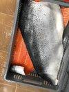 Pink Salmon Fish Fillet