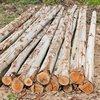 Brown Eucalyptus Wood Logs