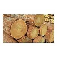 Neem Wood Timber Logs