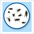 Fly Management Services