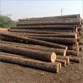 Canadian Pine Wood
