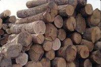 European Timber Type Lumbers