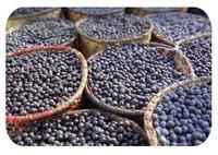 Acai Freeze Dried Organic