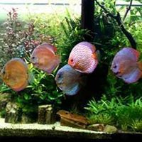 Discuss Aquarium