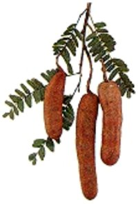 Pure Natural Tamarind