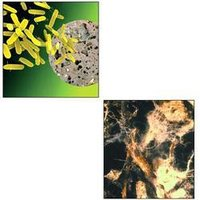 Biological & Herbal Management Of Microbes