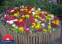 Seasonal Flower Beds Services