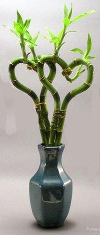 Heart Shape Lucky Bamboo