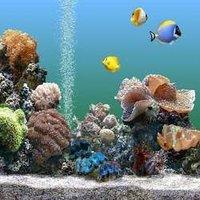 Marine Water Aquariums