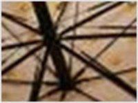 Umbrella Rib Wires