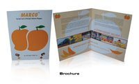Company Brochures Printing Services