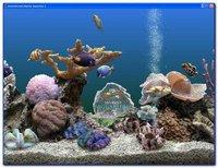 Marine Water Aquarium