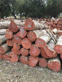 Mp Teak Wood Logs