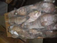 Fresh Frozen Cod Fish