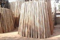 Savukku Or Casuarina Fire Wood Poles