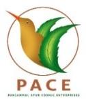 PACE PVT LTD