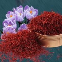 Saffron - Premium Kashmiri
