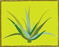 M/S LOHARU AGRO FARM