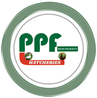 PANNDDU POULTRY FARMS AND HATCHERIES