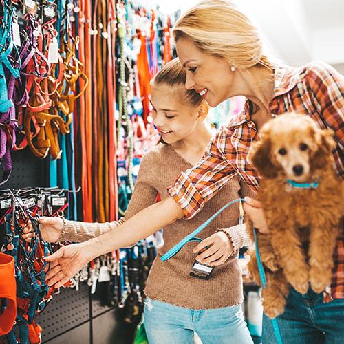 Pet & Accessories