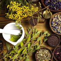 Cancer herbal medicine