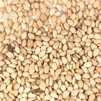 Organic Sesame Seed