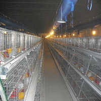 Layer Battery Cage