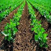 Biofertilizer Plant