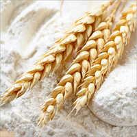 Gluten flour