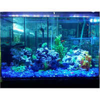 Led Aquariums