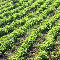 Organic Farming Consultants