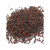 Hybrid brinjal seeds